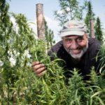 """""""Megmentette az üzletünket"""": az olasz gazdák magasabb szintre lépnek a kannabisszal"""