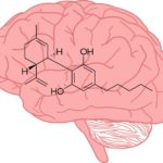 A CBD segíthet gyógyszereket jutattni az agyba