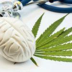 Tanulmány: A növényi eredetű THC/CBD kivonatok csökkentik a demencia tüneteit