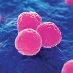 A kannabisz levelei antibakteriális hatást mutatnak MRSA ellen