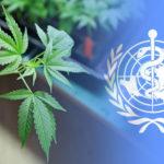 Az ENSZ nyilvánosságra hozza a WHO kannabisz szabályozásáról szavazó országok listáját