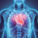 A CBD védő hatása szívsérülésekkel szemben