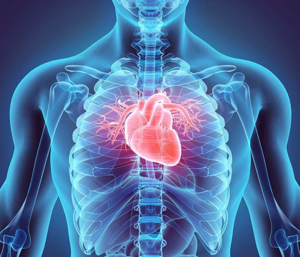 A CBD védő hatása szívsérülésekkel szemben | Magyar Orvosi Kannabisz Egyesület