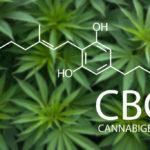 Tanulmány: a kannabigerol (CBG) kezelheti az ideggyulladást és az oxidatív stresszt