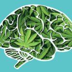 Betekintés a mentális egészség és az orvosi kannabisz kapcsolatába