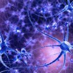 Összezsugorodik a kannabisztól a hippokampuszom? Mi ennek a hosszú távú egészségügyi következménye?