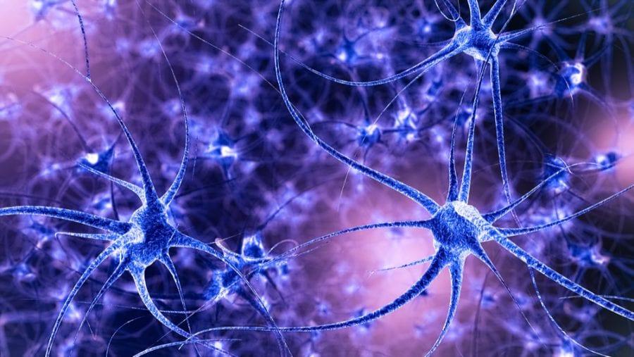 Összezsugorodik a kannabisztól a hippokampuszom? Mi ennek a hosszú távú egészségügyi következménye? | Magyar Orvosi Kannabisz Egyesület