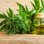 A rostkender Cannabis sativa L. illóolajok kémiai jellemzése és antibakteriális aktivitásának értékelése