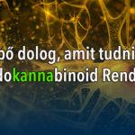 5 meglepő dolog amit tudni érdemes az Endokannabinoid Rendszerről