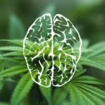 A CBD védelmező hatásai agyi keringési zavar esetén