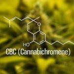 CBC, a feltörekvő kannabinoid