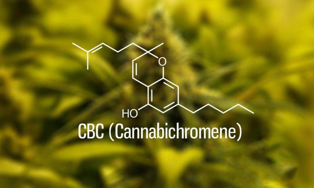 CBC, a feltörekvő kannabinoid   Magyar Orvosi Kannabisz Egyesület