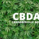 A CBDA potenciális szerepe a hiperalgéziában és gyulladásban