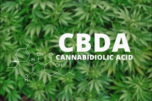 A CBDA potenciális szerepe a hiperalgéziában és gyulladásban | Magyar Orvosi Kannabisz Egyesület