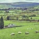 Írország legalizálja az orvosi kannabiszt
