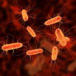 Egy tanulmány szerint a CBD növelheti az antibiotikumok hatékonyságát