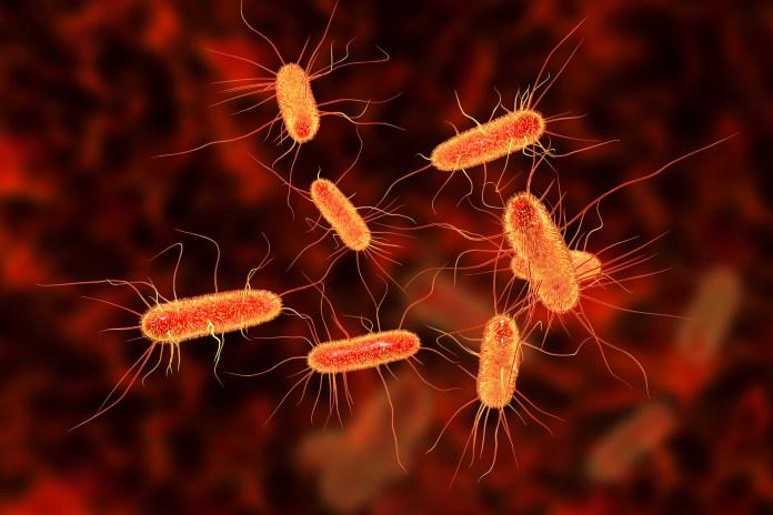 Egy tanulmány szerint a CBD növelheti az antibiotikumok hatékonyságát | Magyar Orvosi Kannabisz Egyesület