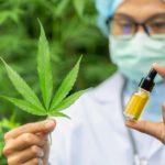 CBD alapú gyógyszert hagyott jóvá az Európai Gyógyszerügynökség