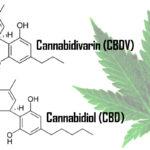 Mi az a CBDV (kannabidivarin)?