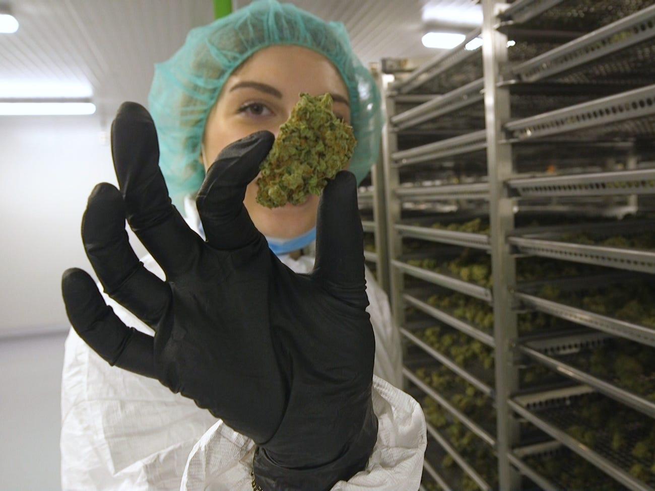 Egy dán város a CO2-semleges kannabisztermelés központjává válhat   Magyar Orvosi Kannabisz Egyesület