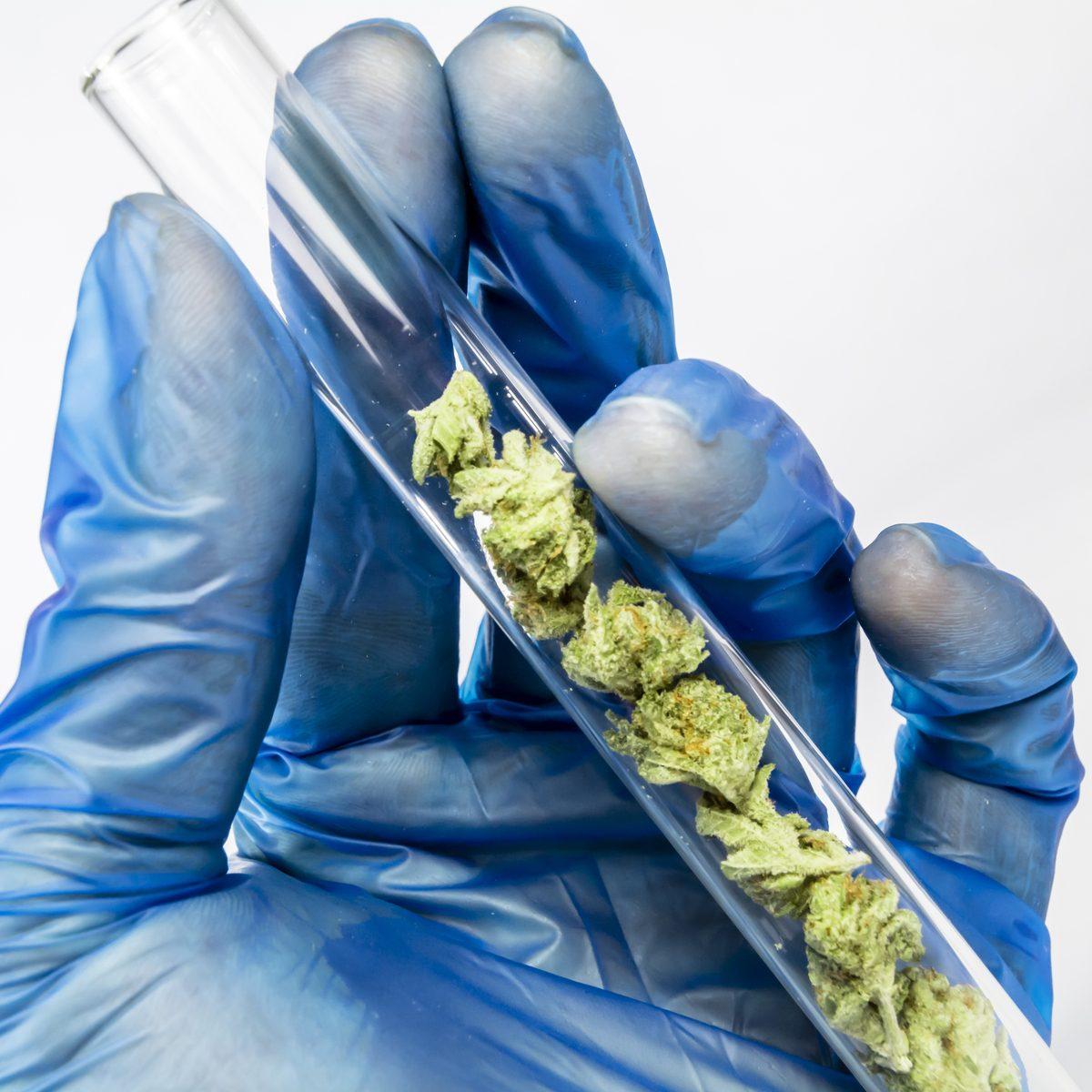 A szintetikus CBDA hamarosan klinikai vizsgálatokban bizonyíhat szorongás és gyulladás kezelésében   Magyar Orvosi Kannabisz Egyesület