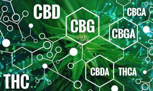 Lehetséges-e, hogy a két nem pszichotróp kannabinoid kombinációja harcol az ideggyulladás ellen? | Magyar Orvosi Kannabisz Egyesület