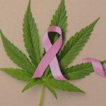 Hogyan könnyítheti meg a kannabisz a mellrák kezelését?