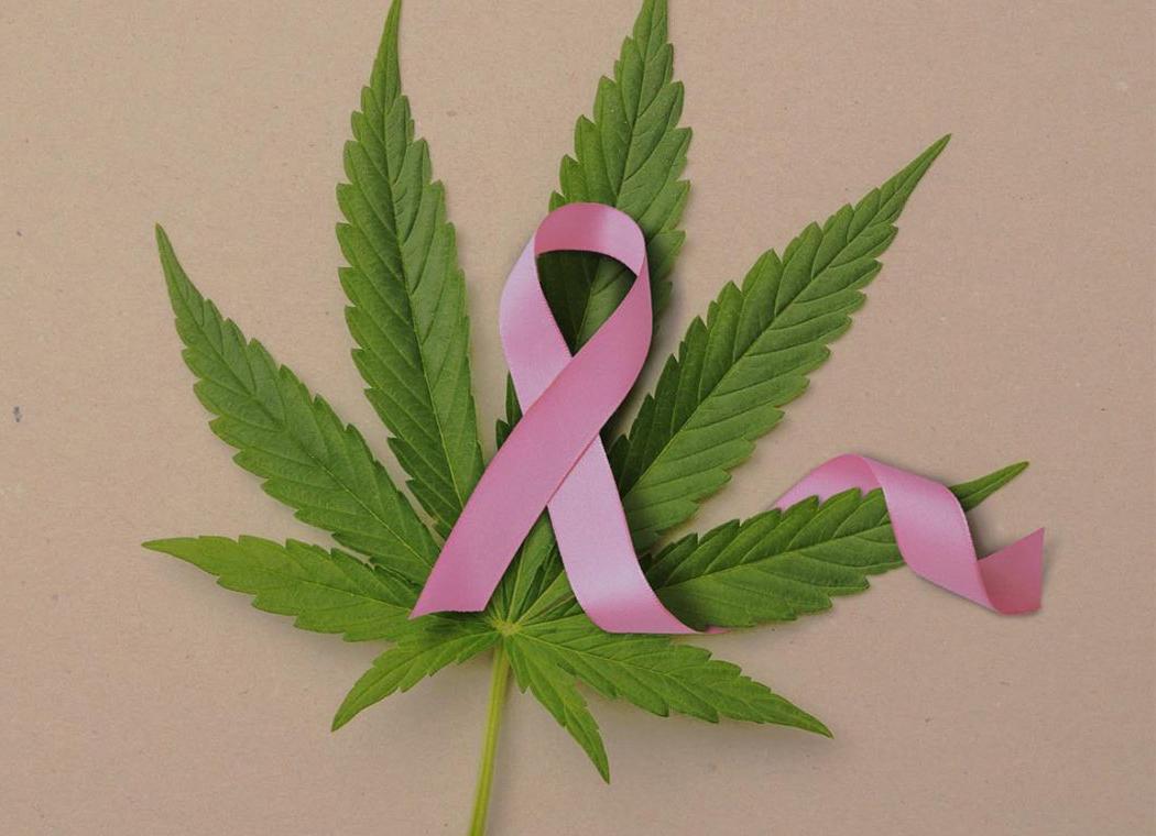 Hogyan könnyítheti meg a kannabisz a mellrák kezelését?   Magyar Orvosi Kannabisz Egyesület