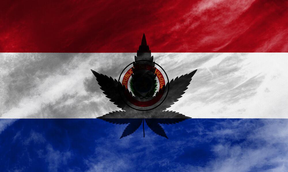 Paraguay megkezdi a kannabisz termesztését kutatási és orvosi célokra | Magyar Orvosi Kannabisz Egyesület