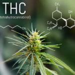 A THC és a CBD antioxidáns aktivitásának vizsgálata Cannabis sativa kivonatokban