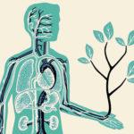 A legtöbb THC- és CBD-olaj kárba megy a szervezetben – ez az oka