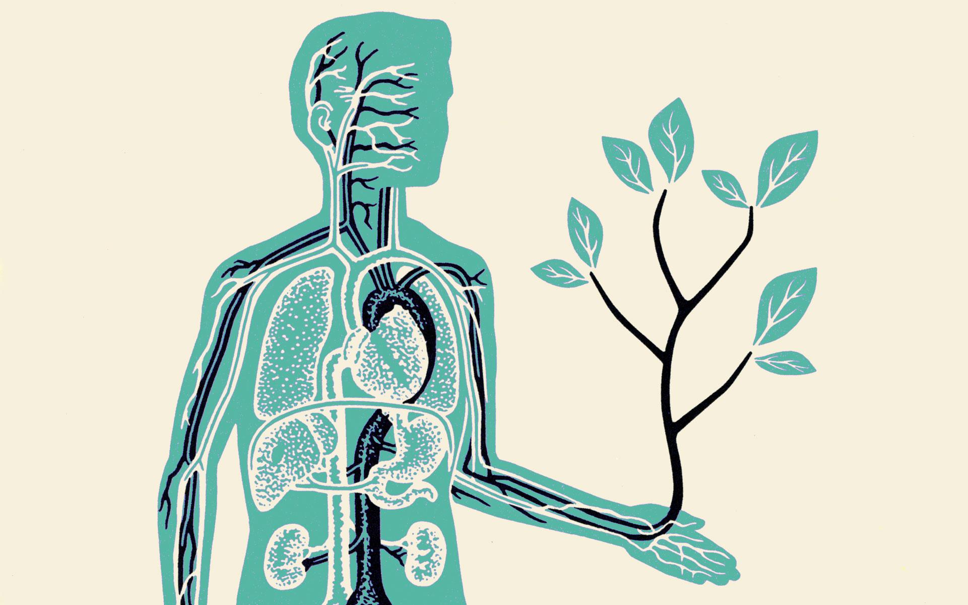 A legtöbb THC- és CBD-olaj kárba megy a szervezetben - ez az oka | Magyar Orvosi Kannabisz Egyesület
