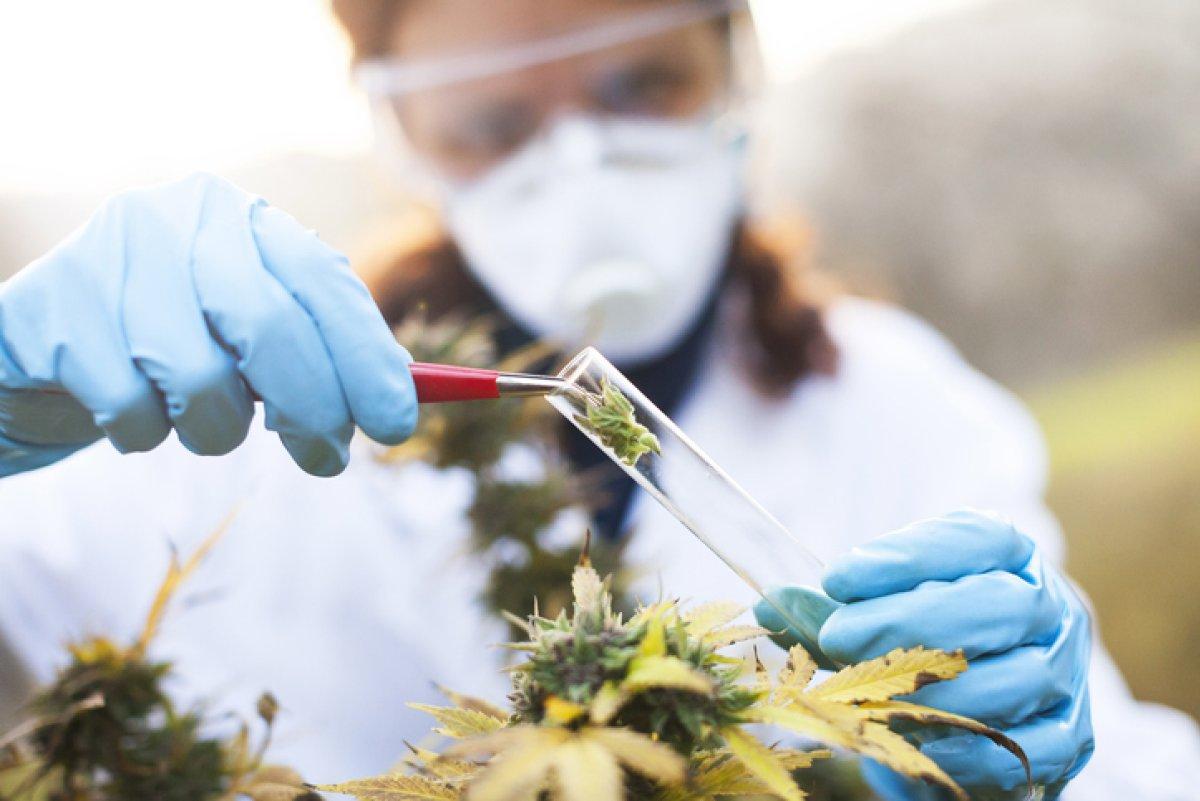 Az orvosi kannabisszal végzett kutatások áttekintése   Magyar Orvosi Kannabisz Egyesület