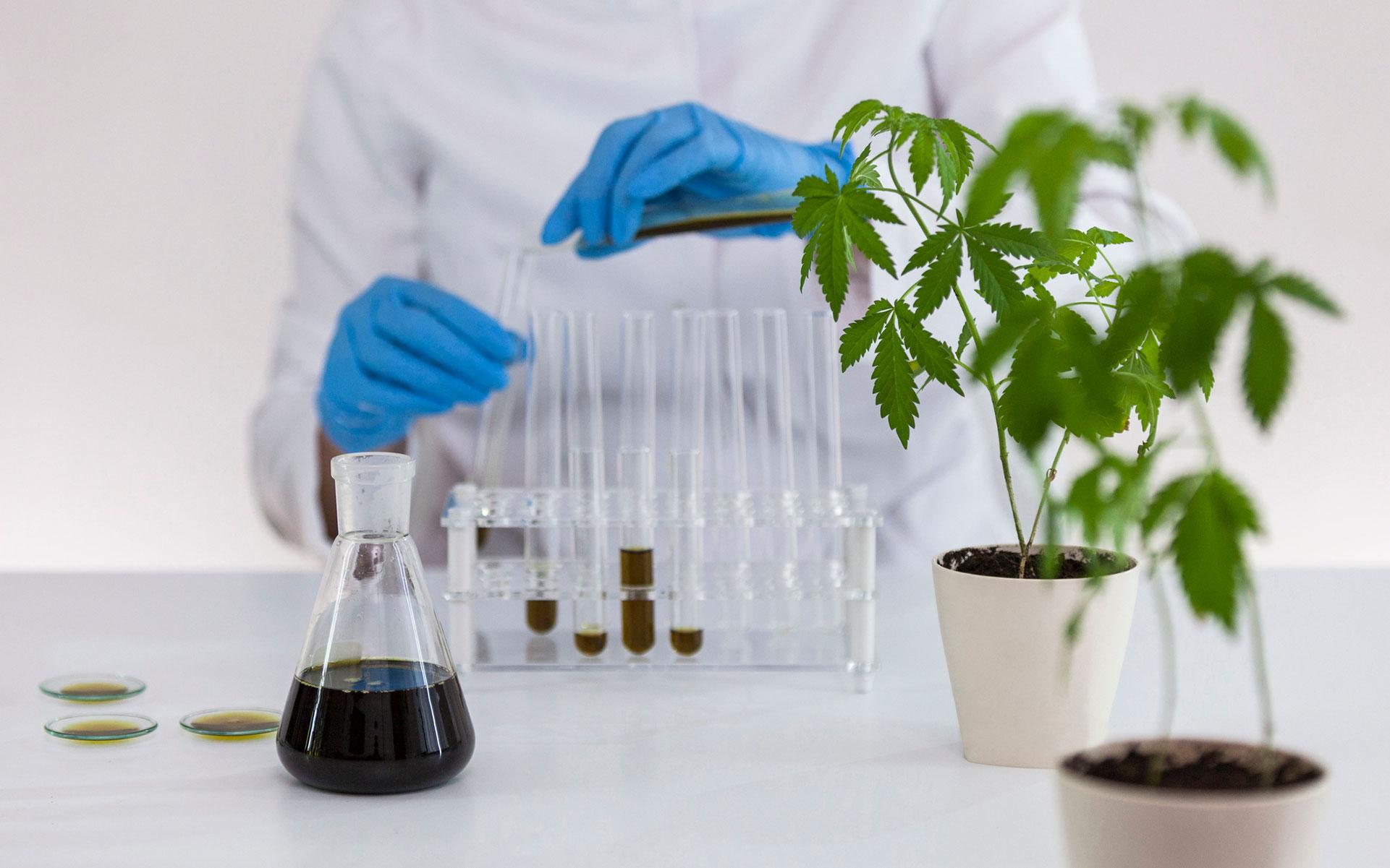 Az FDA aggódik a CBD miatt. Mit is jelent ez számunkra?   Magyar Orvosi Kannabisz Egyesület