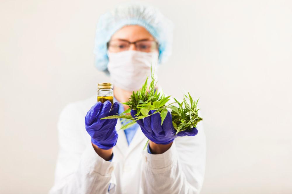 Kannabisz polifarmakológia: Erősség vagy gyengeség?   Magyar Orvosi Kannabisz Egyesület
