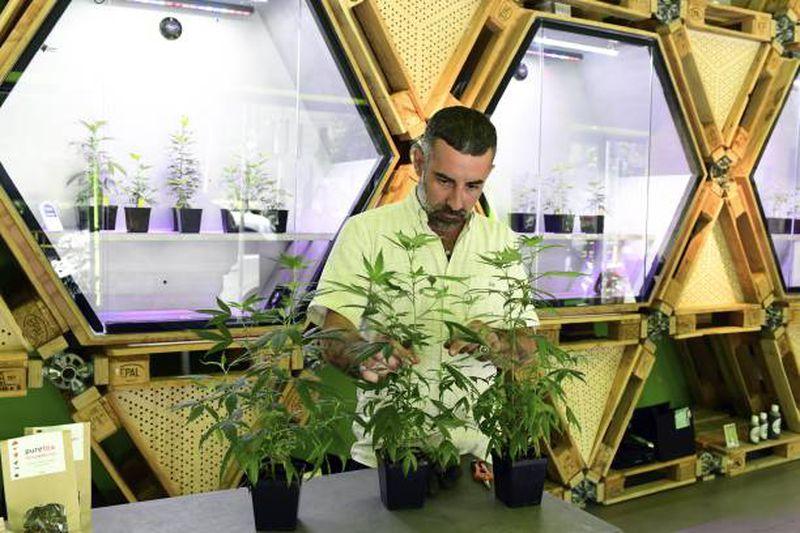 Olaszország az orvosi kannabisz szélesebb körű legalizálása felé halad | Magyar Orvosi Kannabisz Egyesület