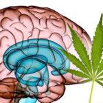 A THC és CBD kombináció sikeres ereményeinek jelentése a 2. fázisú klinikai vizsgálatokban agydaganatra