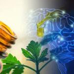 A CBD hatékonysága epilepsziás betegeknél a klobazámhoz viszonyítva