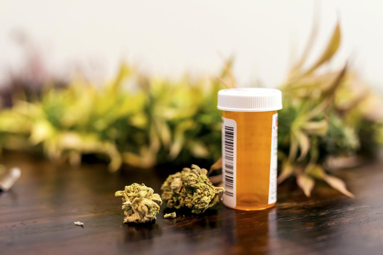 Az orvosi kannabisz használata rohamosan növekszik Csehországban | Magyar Orvosi Kannabisz Egyesület
