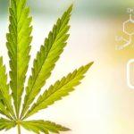 A CBD antioxidáns és gyulladáscsökkentő tulajdonságai