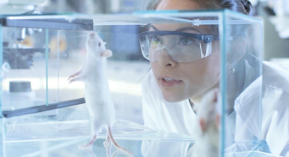 A magas CBD dózisok javították a kognitív funkciókat Alzheimer-kór állatmodelljében | Magyar Orvosi Kannabisz Egyesület