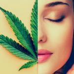 Az endokannabinoid rendszer és az ösztrogén