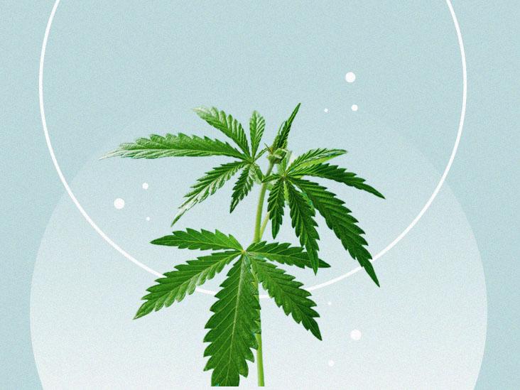 Visszanyert én: A kannabisz fájdalomcsillapításának fenomenológiai vizsgálata   Magyar Orvosi Kannabisz Egyesület