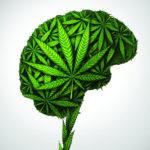 Esettanulmány: A kannabiszterápia sikeresen enyhíti a kezelhetetlen traumás agyi sérüléssel járó tüneteket