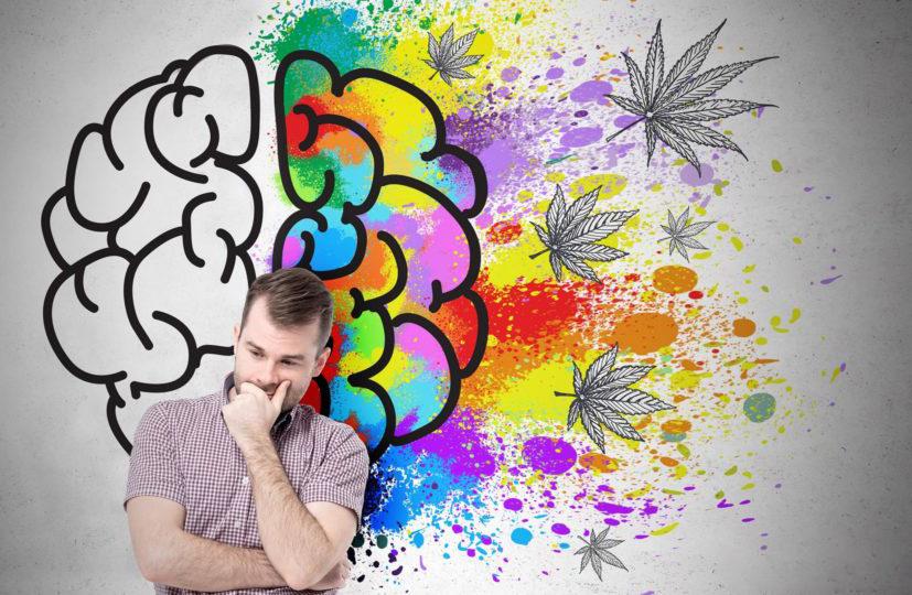 A rendszeres kannabiszhasználat csak minimális hatással lehet a kognícióra | Magyar Orvosi Kannabisz Egyesület