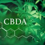 A CBDA csökkenti a trauma által kiváltott szorongással kapcsolatos viselkedést
