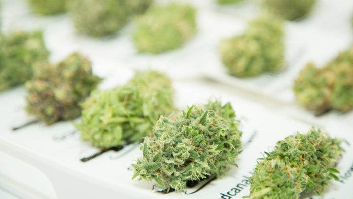 Az orvosi kannabiszt használó betegek kevesebb egészségügyi forrást használnak   Magyar Orvosi Kannabisz Egyesület