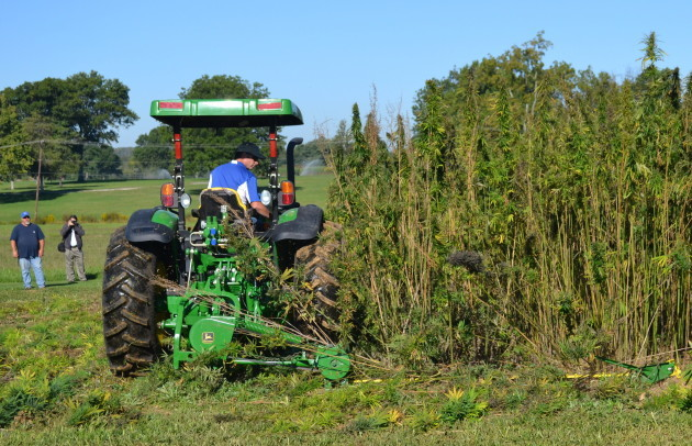 Írországban egyre több kendert termesztenek | Magyar Orvosi Kannabisz Egyesület