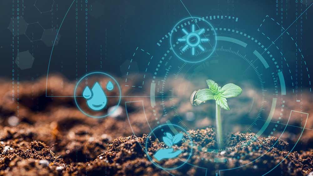 Regeneráló kannabisz gazdálkodás – A megoldás a lábunk előtt hever | Magyar Orvosi Kannabisz Egyesület