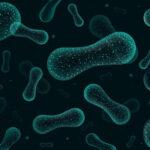 A bélrendszer mikroflórája és az endokannabinoid rendszer